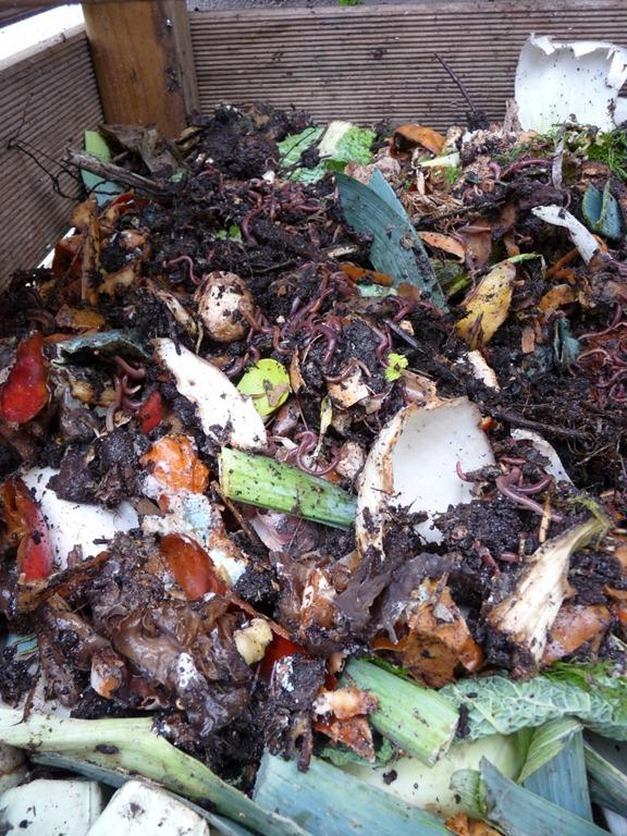 Les vers de terre grouillent dans le compost.