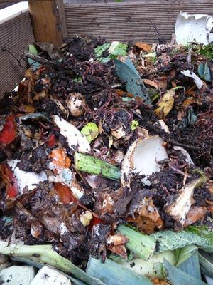 Les vers du compost