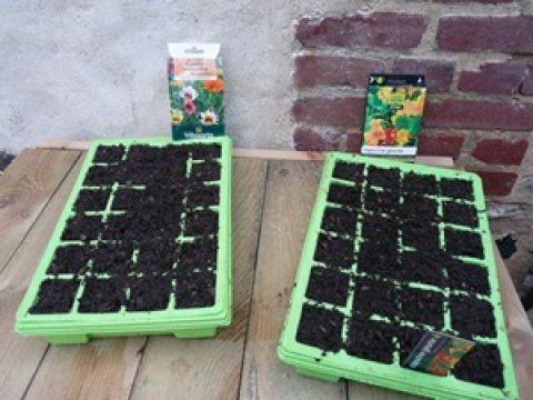 Les premiers semis de l'année