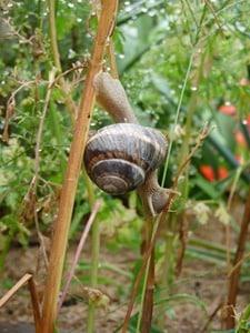 La souplesse de l'escargot