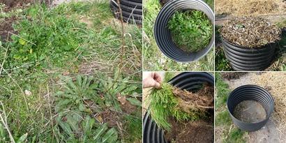 Planter des courgettes autrement.