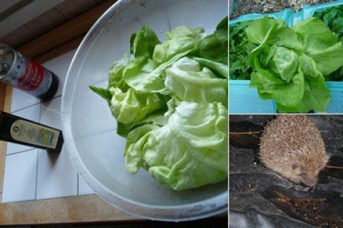 Salade du jardin : un régal !