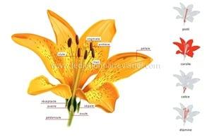 structure-fleur