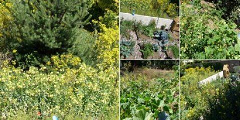 Favoriser la biodiversité au potager