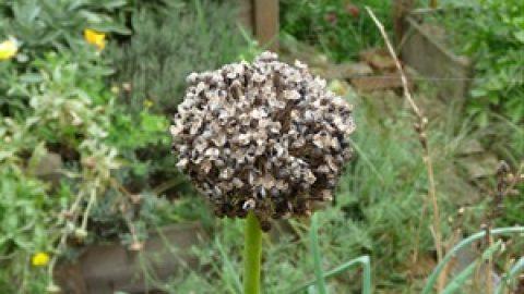 semer des laitues d 39 hiver mon potager en carr s. Black Bedroom Furniture Sets. Home Design Ideas