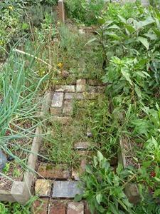 Mauvaises herbes dans l'allée