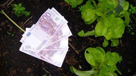 Faire des économies avec le potager ?