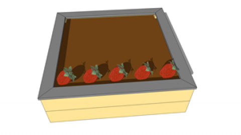 Planter des fraisiers.