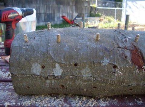 Cultivez des champignons sur des rondins de bois.