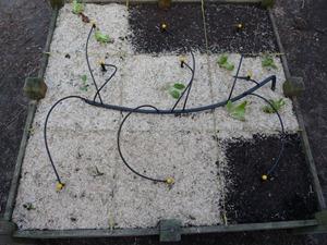 Arrosage automatique du potager en carrés