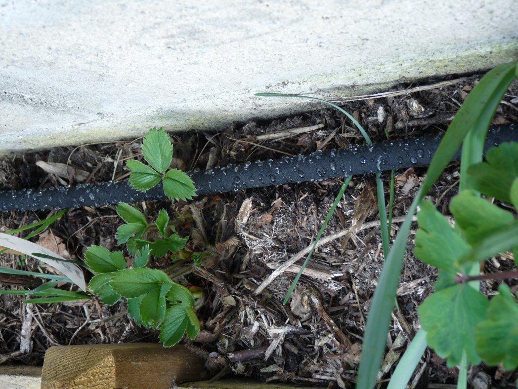 Arrosage automatique du potager en carr s mon potager en - Arrosage jardin potager ...