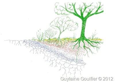 Naissance et évolution du sol