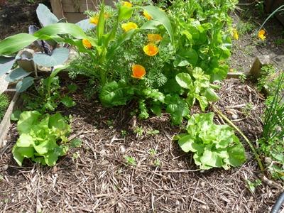 comment lutter contre les limaces au jardin