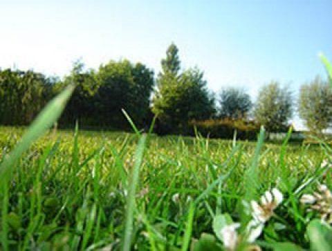 Les 3 avantages de jardiner sans produits chimiques
