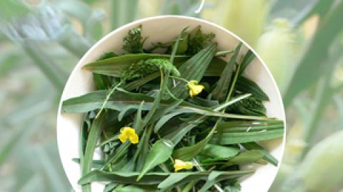 Surprenez vos invités avec un mesclun de plantes sauvages !