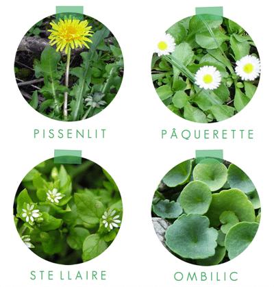 planche de plantes sauvages 1