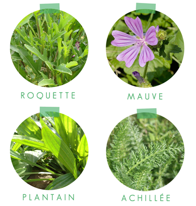 planche de plantes sauvages 2
