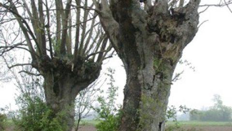 Evolution du potager idéal : planter des arbres