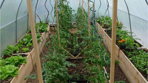 Pourquoi cultiver sous serre ?
