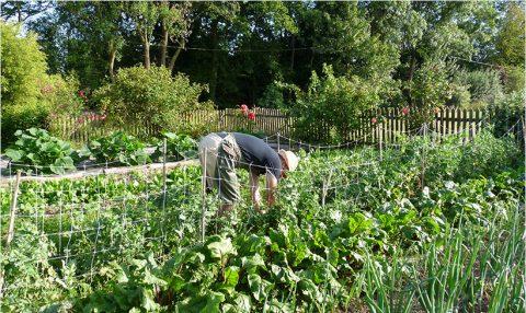 Présentation des méthodes de jardinage