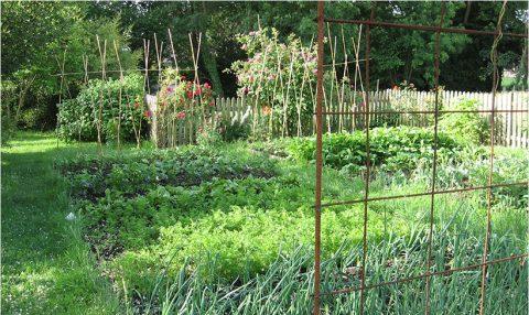 Le seul conseil de jardinage valable