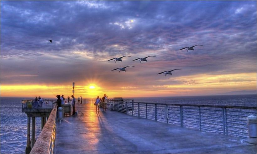 oiseaux-bord-de-mer