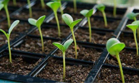 Methode pour reussir vos semis