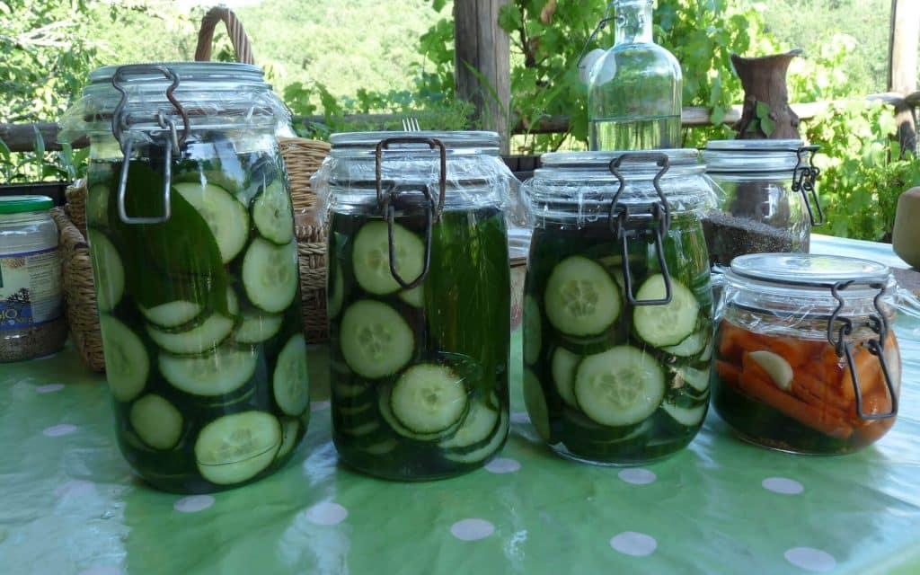 Les bienfaits de la facto-fermentation sur la santé : Lacto-fermentation de concombre et de carottes avec des feuilles de cerisiers dans une saumure.