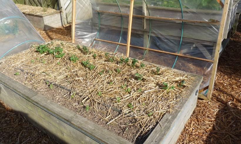 Le paillage rend plus difficile le semis des graines fines