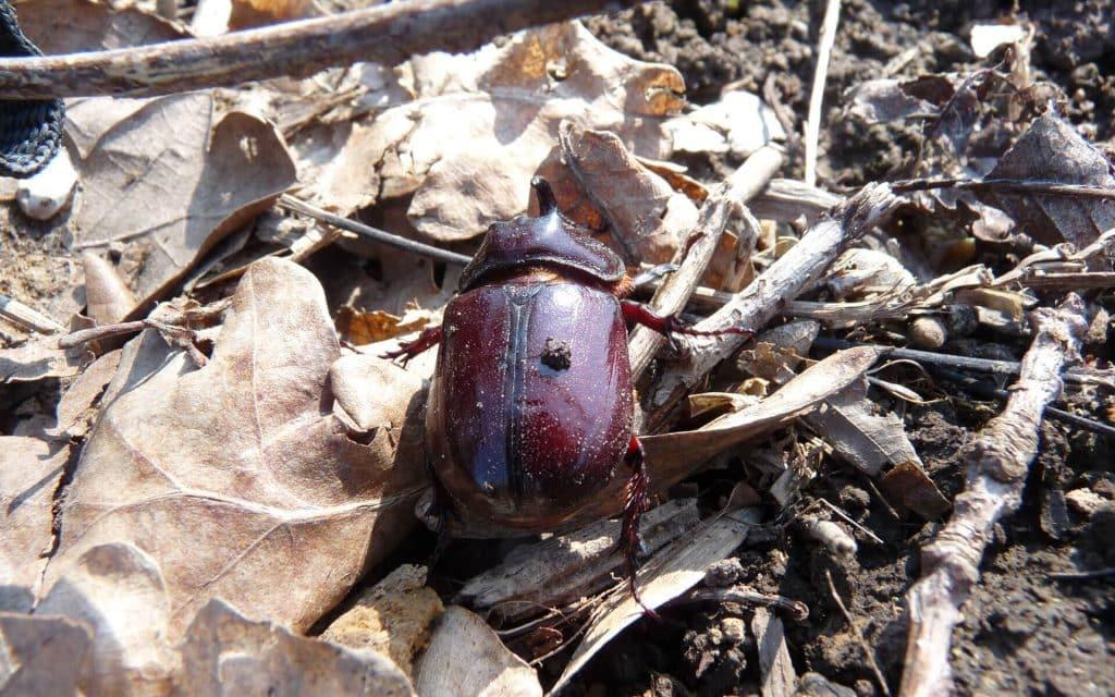 La prolifération des insectes en tout genre dans l'épaisse couche de paillage est un bon signe de l'amélioration du sol