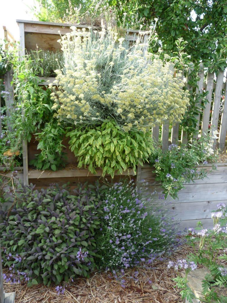 Les plantes aromatiques se développent tellement bien que l'on ne voit plus le potager vertical.
