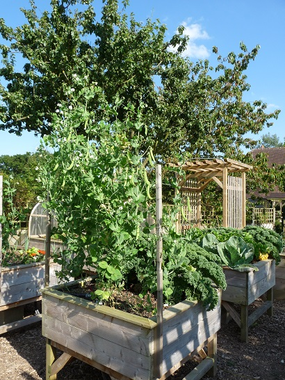 Attention à tous les légumes qui se développent en hauteur !