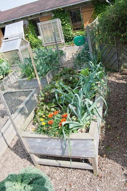 Ne faites pas cette erreur de planter des poireaux dans un potager surélevé de 80 cm.