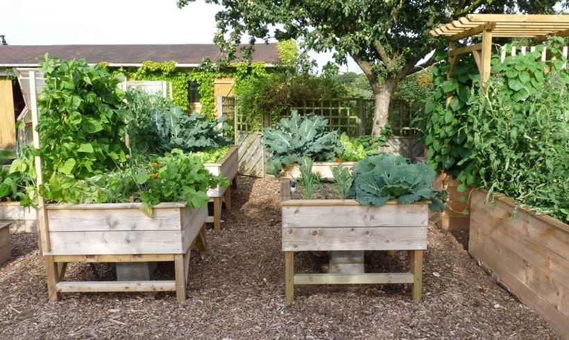 Tous les légumes sensibles aux ravageurs tel que les limaces seront protégés dans un potager surélevé.