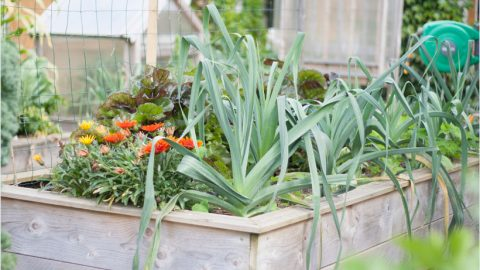 Que planter dans un potager surélevé ?
