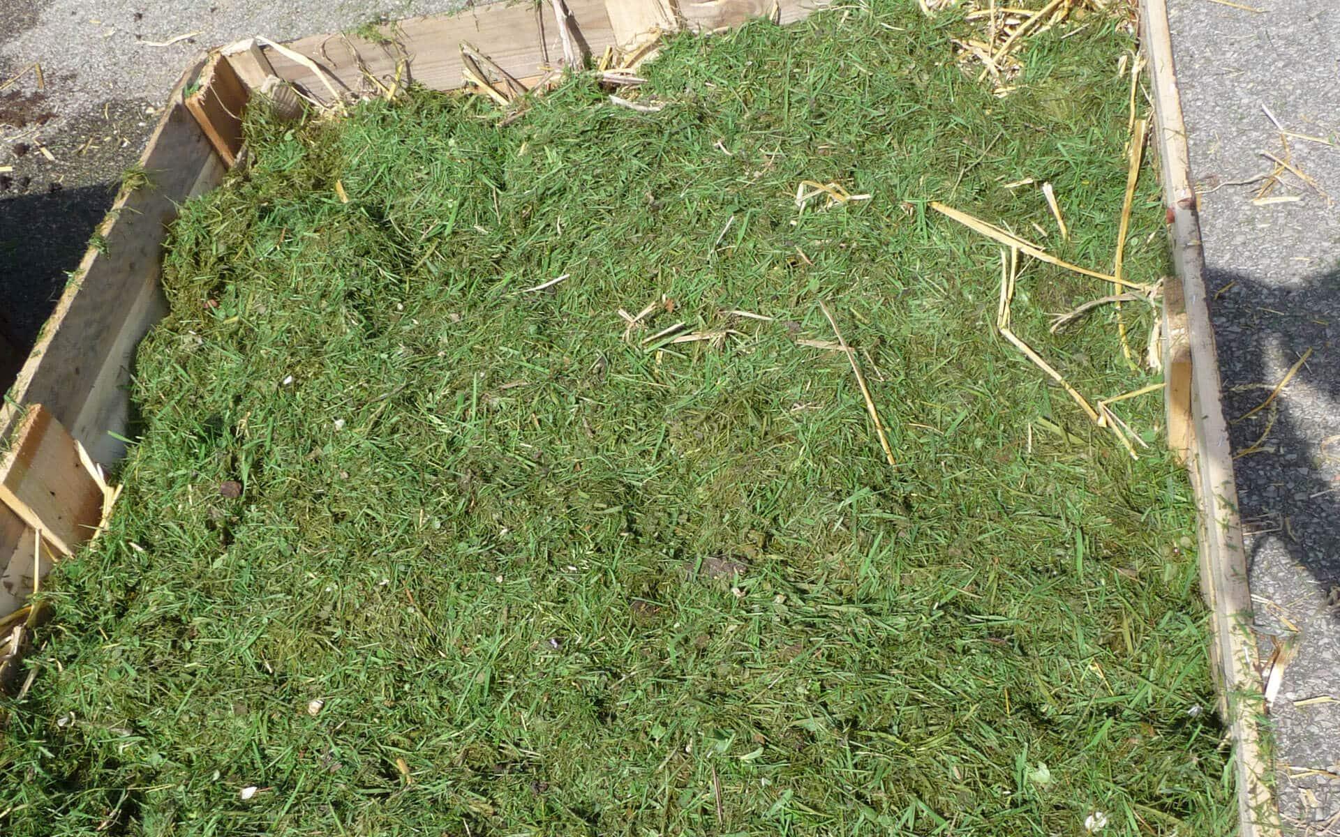 « Les tontes de gazon sont certainement le paillage le plus facile a utiliser pour le jardinier. Elles se mettent en couche fine lorsqu'elles sont fraîches, en litière plus épaisses lorsqu'elles sont sèches. »
