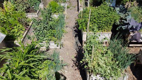 Le potager en carrés en permaculture
