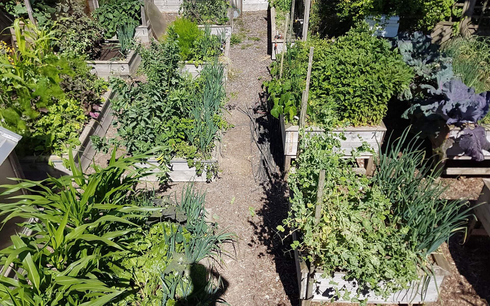 Potager En Carré Fabrication le potager en carrés en permaculture - mon potager en carrés