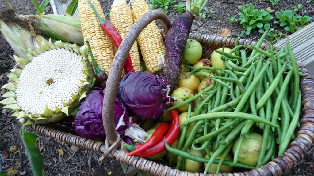 Dans une recherche d'autonomie alimentaire, les légumes sont le pl.us facile a produire