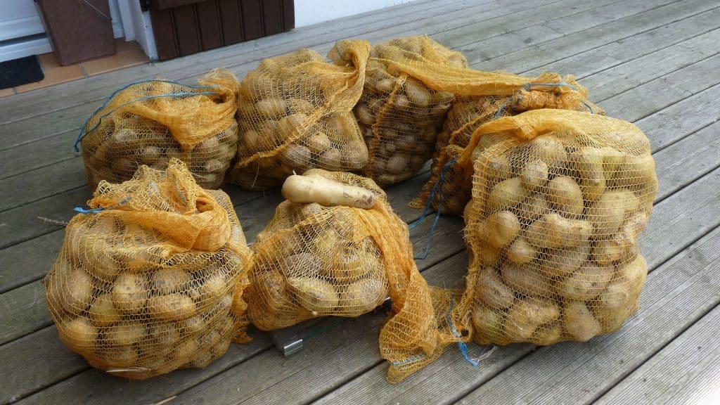 Une base pour l'autonomie alimentaire, les pommes de terre