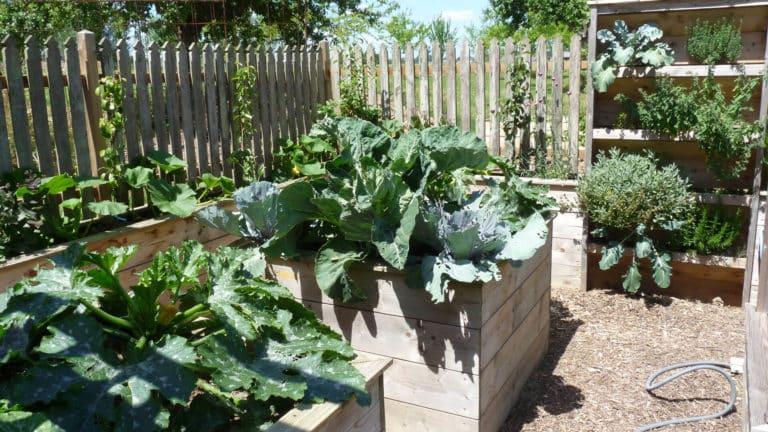 Les potager surélevés sont plantés de choux et de courgettes. Le potager vertical est cultivé avec des aromatiques.