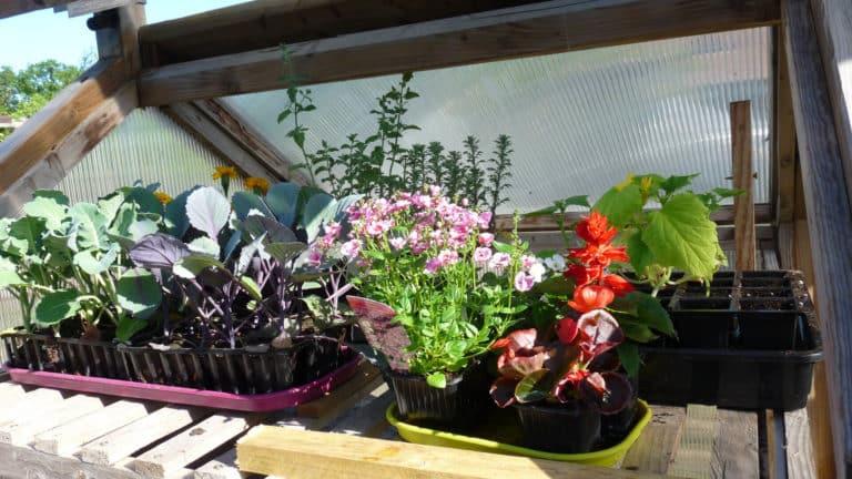 plants-en-attente-dans-serre-de-jardin