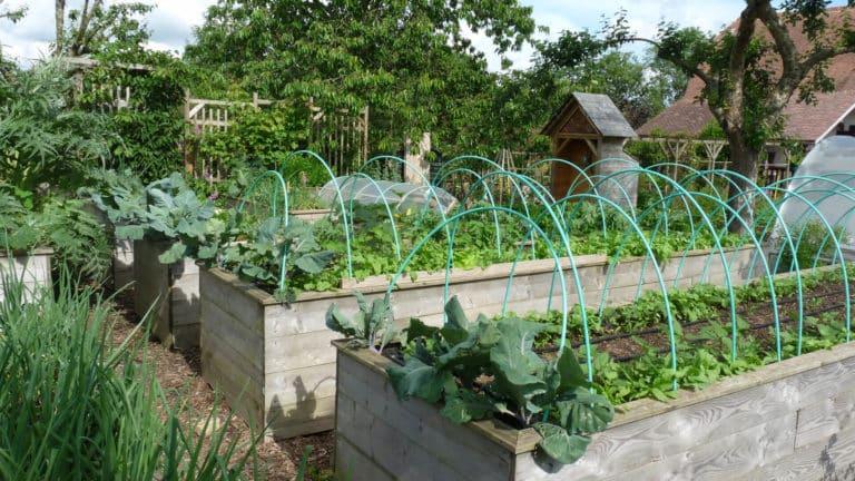 potager-sureleve-intensif-cultive.jpg