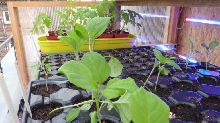 semis-en-pepiniere-exterieur