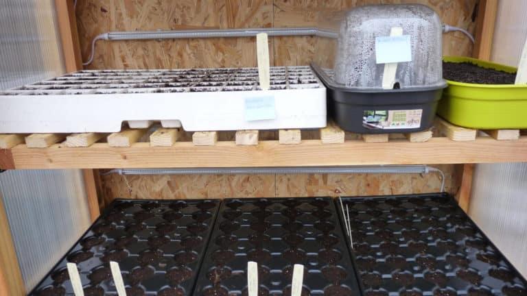 semis-en-pepiniere-interieur-2