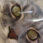 Photo de Profil de LaBuche
